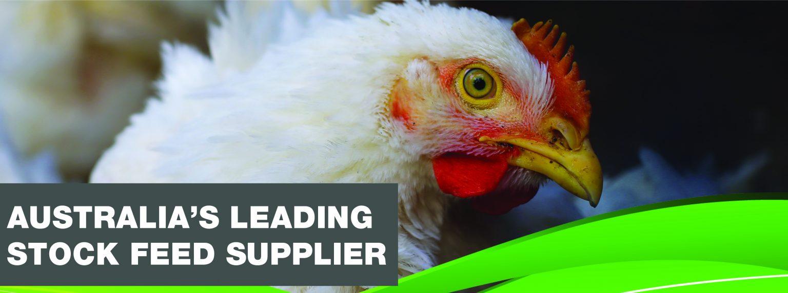 VVRS Website Banner_rooster 1